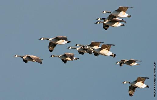 canada goose victoria parka